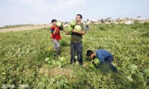 Petits producteurs Marocains