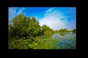 Mangrove Qatar 002