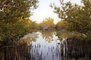 Mangrove Qatar