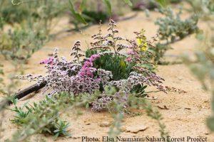 une-fleur-dans-le-desert-a1